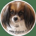 phalenes.fr