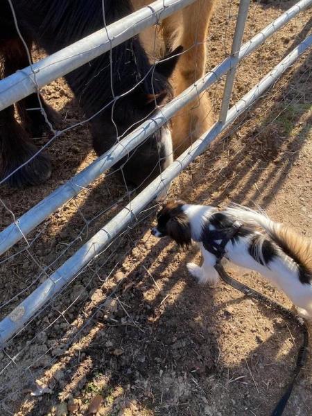 Priam rencontre le cheval