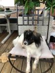 Princesse Principessa sur sa terrasse