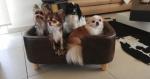 Calypso et ses amis