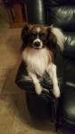Lenny sur son canapé