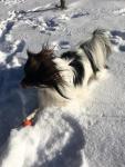 Pâris s'éclate dans la neige