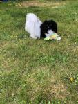 Moka dans son jardin