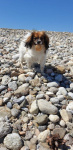 Olya à la plage
