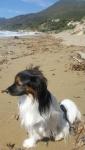 Romy sur la plage de Robinson